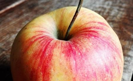 Sprech-Stimm-Workshop Esslingen Bild Apfel